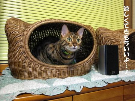 籐の猫ベッドの中のロビン