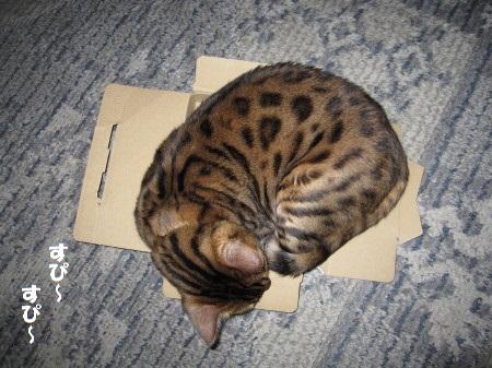 箱で寝るロビン