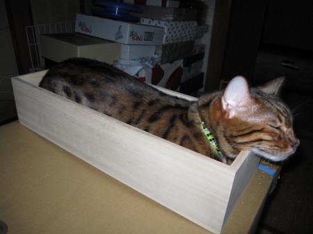 小箱に入ったロビン