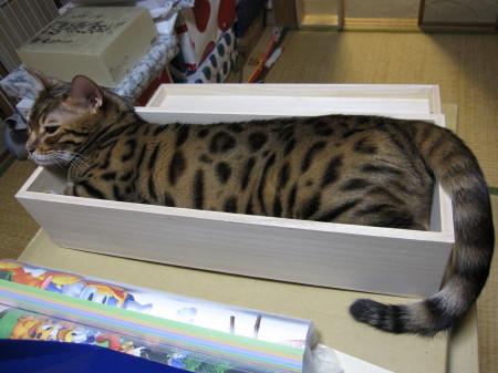 木箱に入ったロビン