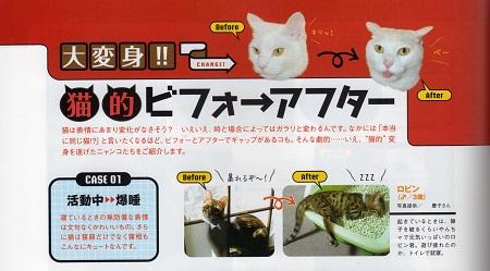 雑誌「猫生活」の切り抜き