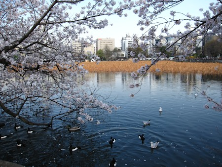 上野公園 不忍池(ハス池)