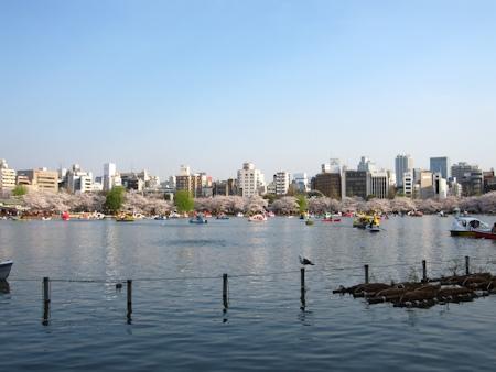 日没前の上野公園 不忍池